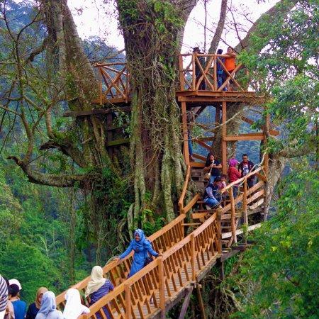 Berselfie Ria Di Rumah Pohon Curug Ciherang Travelklik