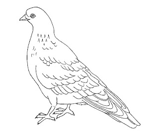 Adorable Pigeons Coloring Pages