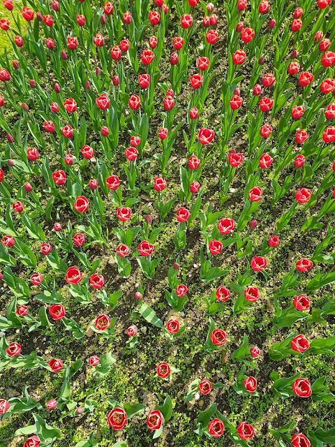parco giardino sigurtà tulipanomania