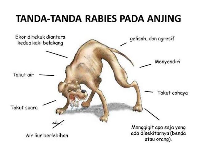 Tanda- Tanda penyakit Anjing Gila pada Haiwan