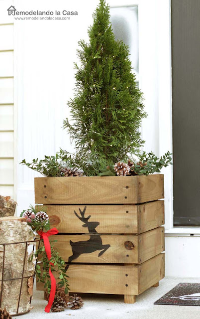 pine tree with pinecones in wooden planter