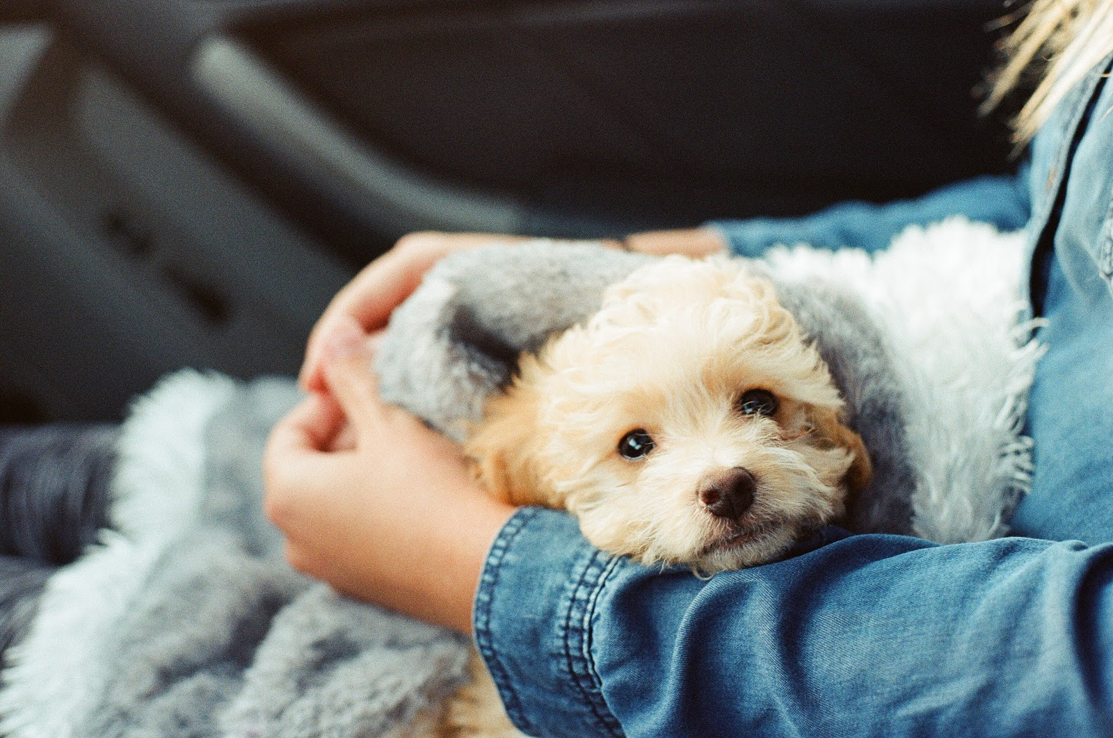 , Pets:  How to Prepare For the Arrival of a New Puppy (+ Cute Puppy Photos)