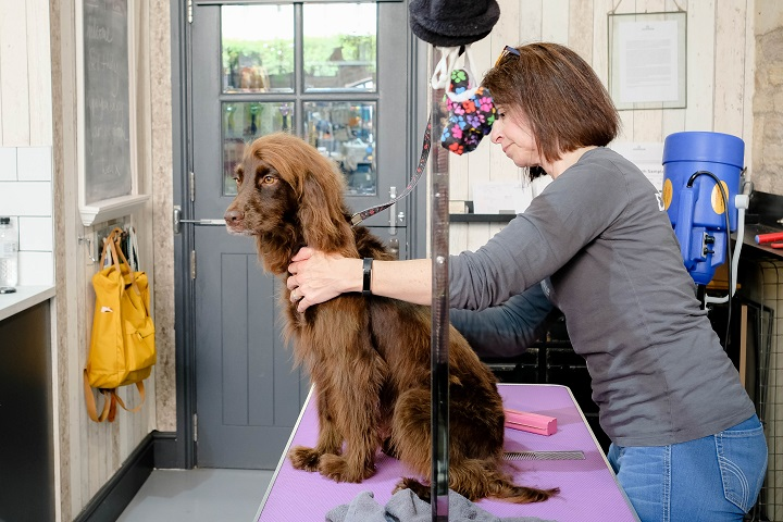 Last year Dogwash opened, with the relocation of the store, a full grooming salon at the back of the very popular cafe and pet shop.