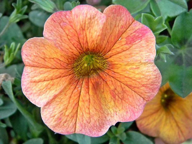 działka, kwiaty w ogrodzie