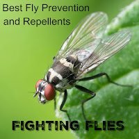 Fighting Flies - Best Fly Prevention and Repellents a close up of a flying insect