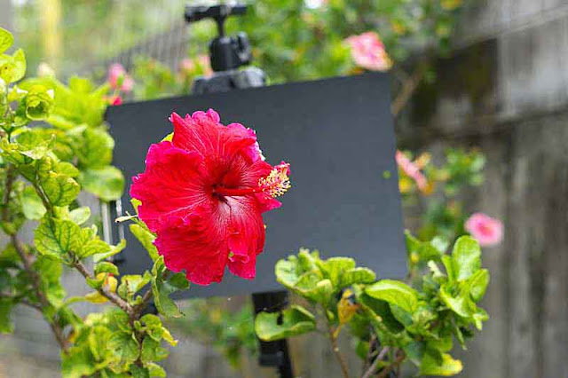 flower, wall,garden, fence, distractions, tripod, black board
