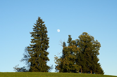 Image of the moon rising between two trees