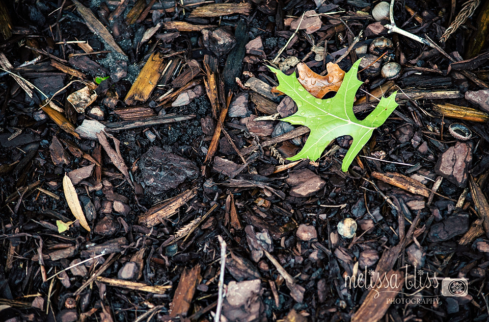 Nurture Can Always Override The Potential Influence Of Nature