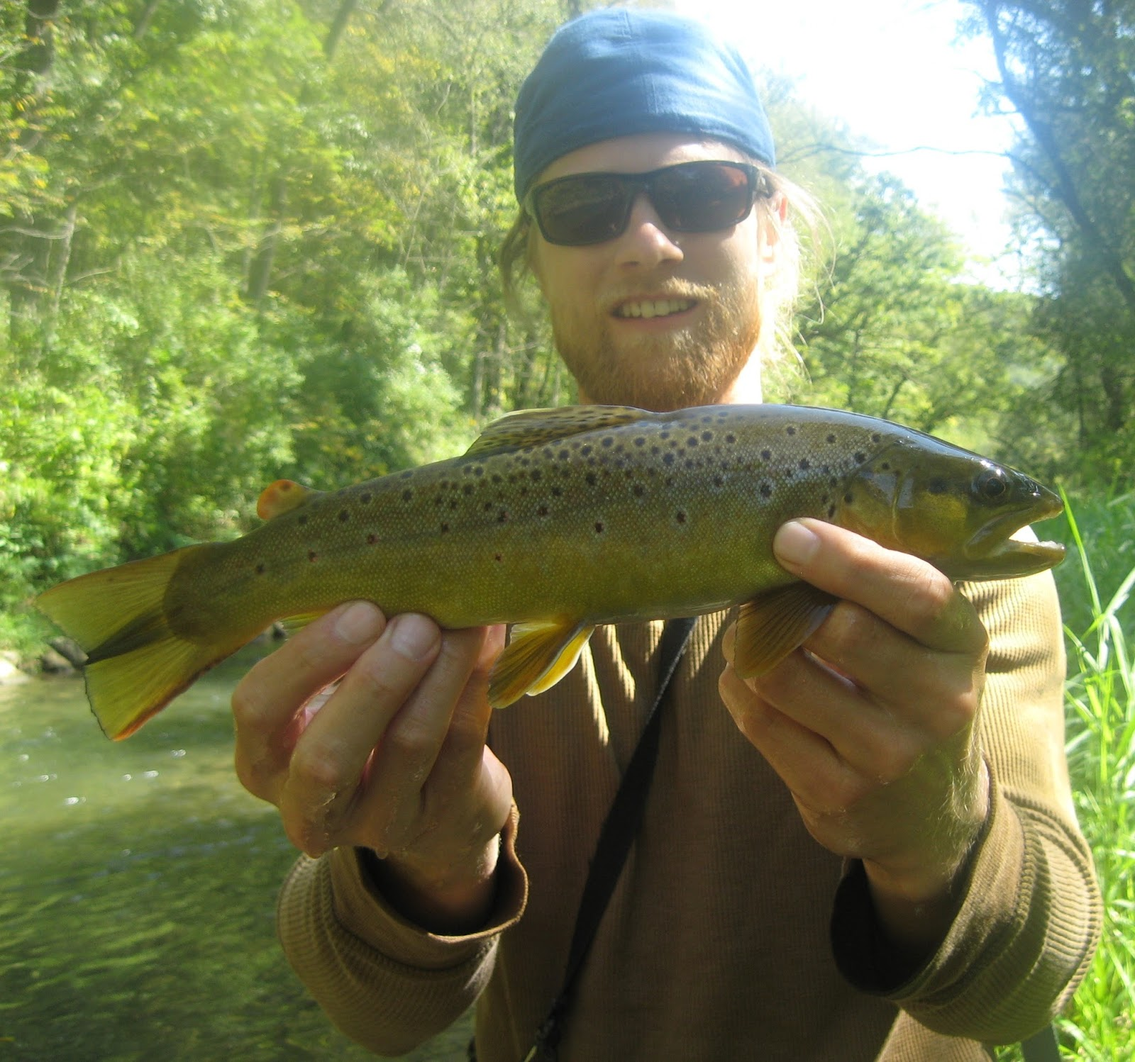 Minnesota driftless fly fishing trip report fishin 39 with tim for Driftless fly fishing