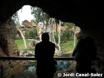Viendo a los chimpancés en Bioparc Valencia