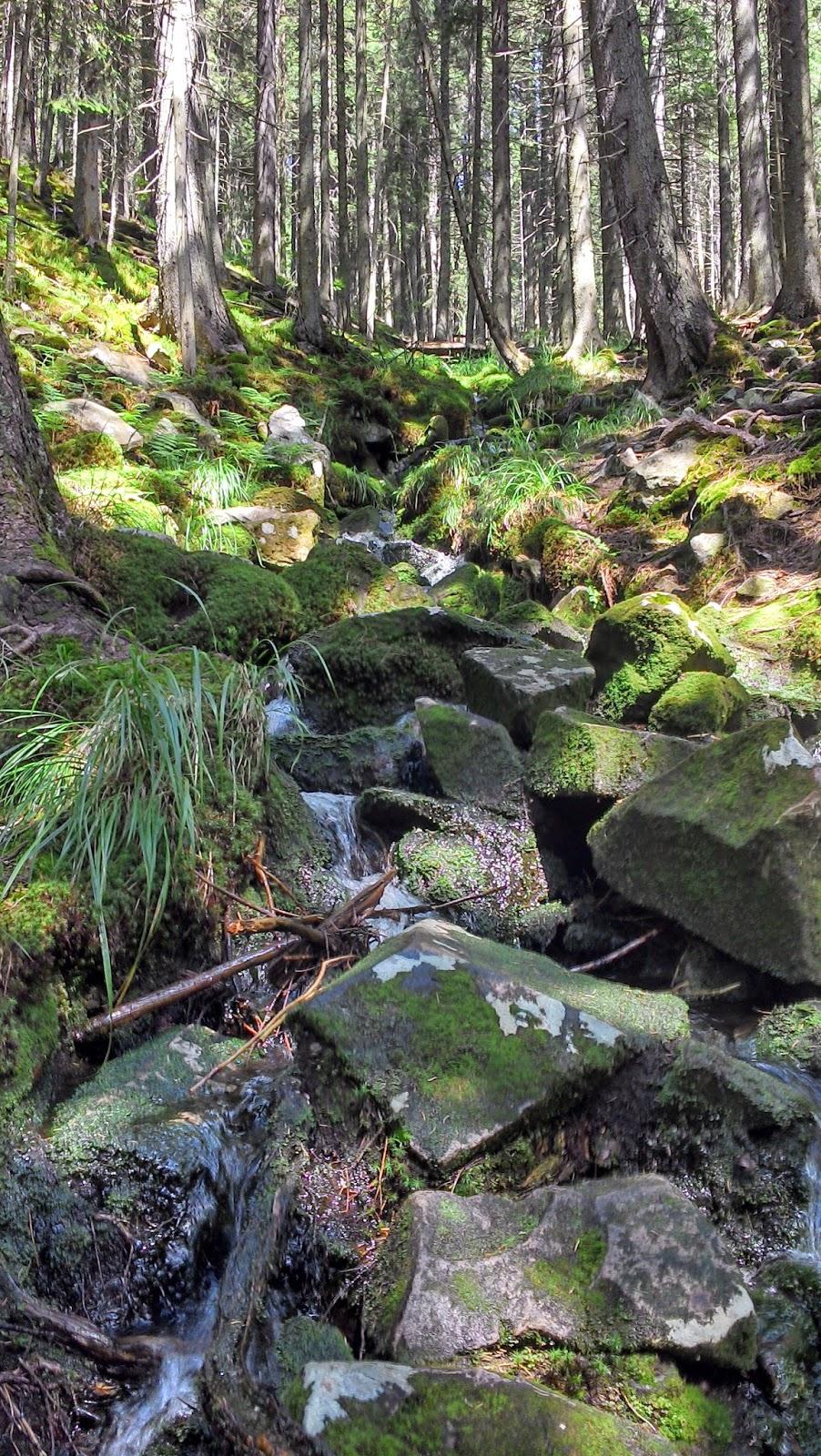 Лесной-Пейзаж