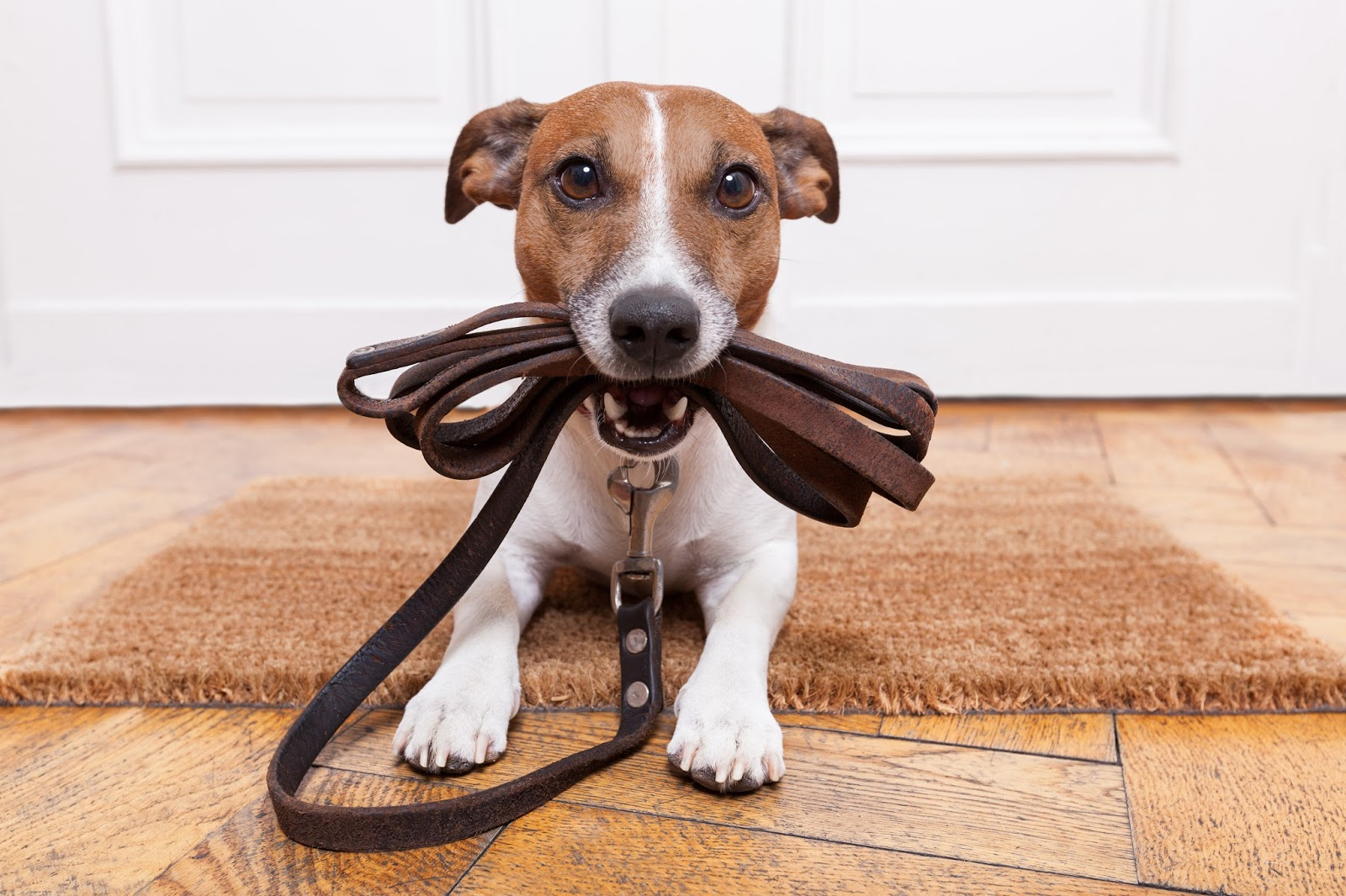 Reap the Benefits of Becoming a Pet Sitter on Rover.com  via  www.productreviewmom.com