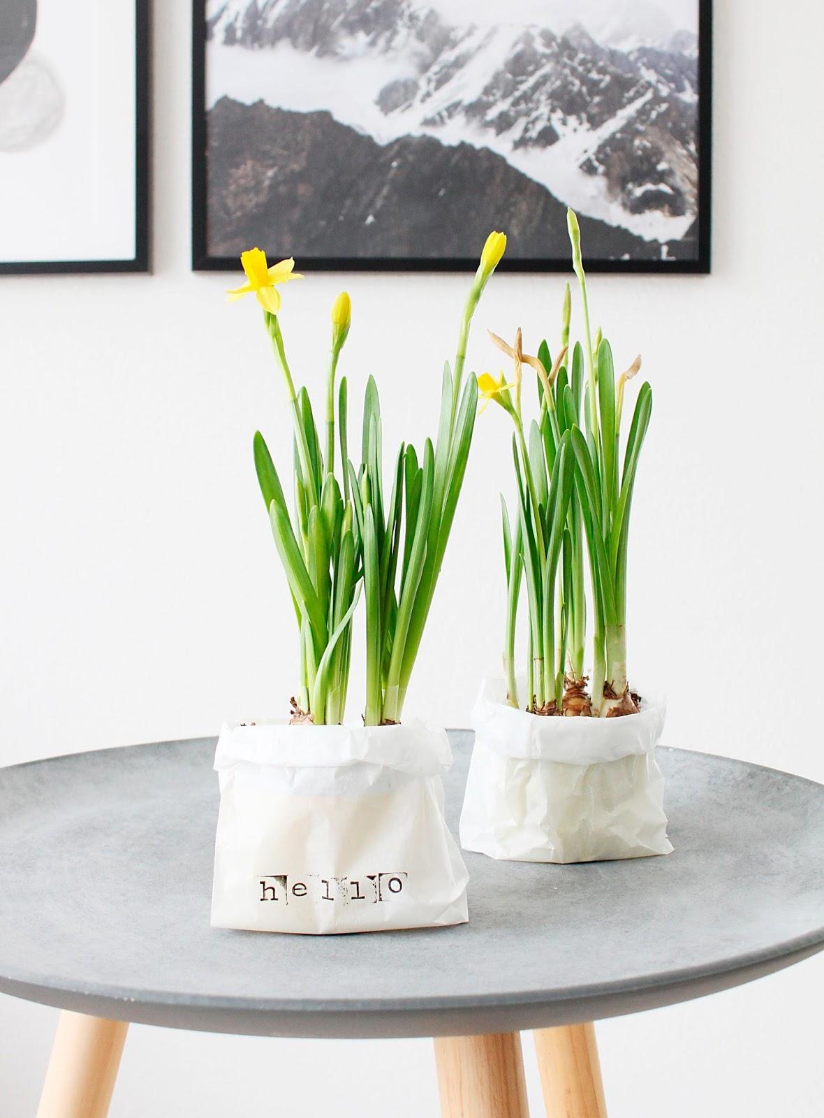 DIY Narzissen Blumentopf im nordischen Stil mit Butterbrottüte