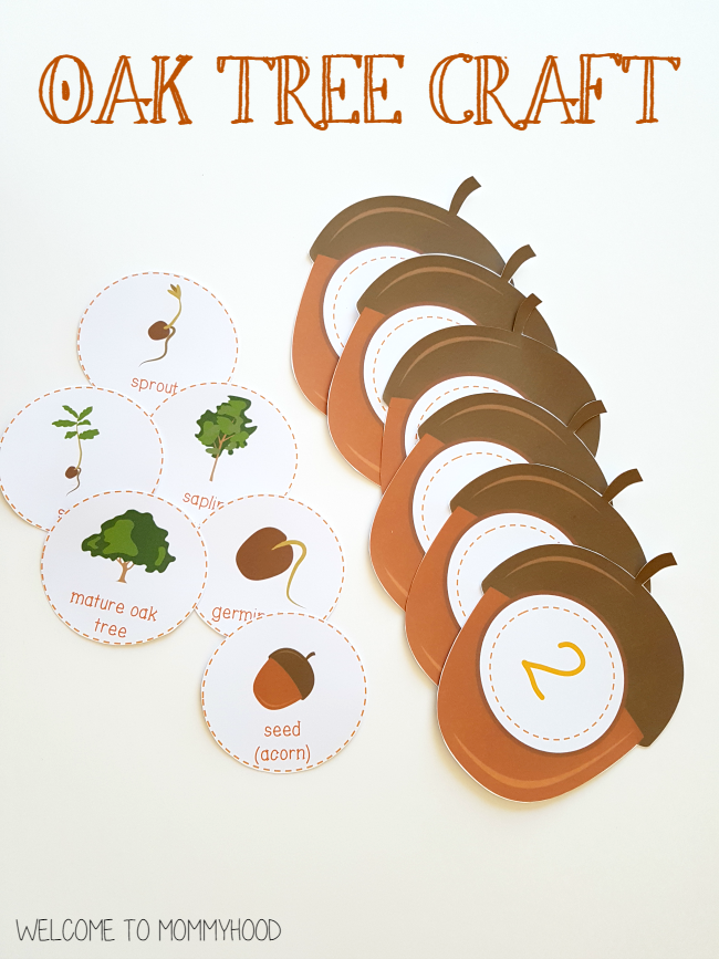 Montessori Inspired: Oak tree life cycle activities and printables by Welcome to Mommyhood #montessoriprintables, #montessori, #preschoolactivities, #preschool
