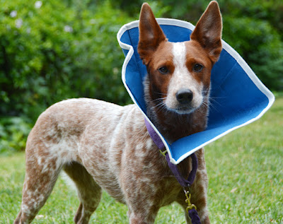 Soft and comfortable Cone of Shame
