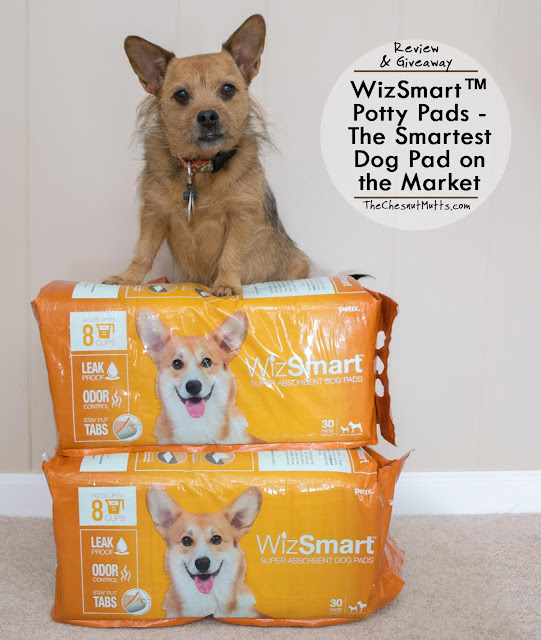 Review & Giveaway: WizSmart™ Potty Pads - The Smartest Dog Pad on the Market