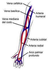 hinchazon de venas del brazo izquierdo