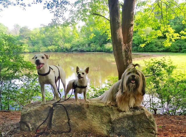 dog friendly Lullwater Park in Atlanta