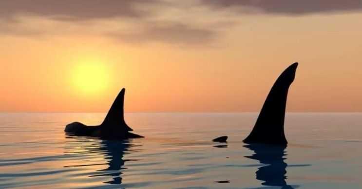 Balina köpek balığı da oldukça büyük bir deniz canlısıdır, buna rağmen oldukça zararsızdır.