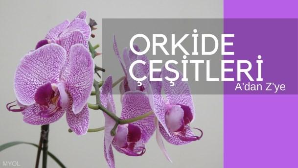 Orkide Çeşitleri A'dan Z'ye Orkide Cinsleri