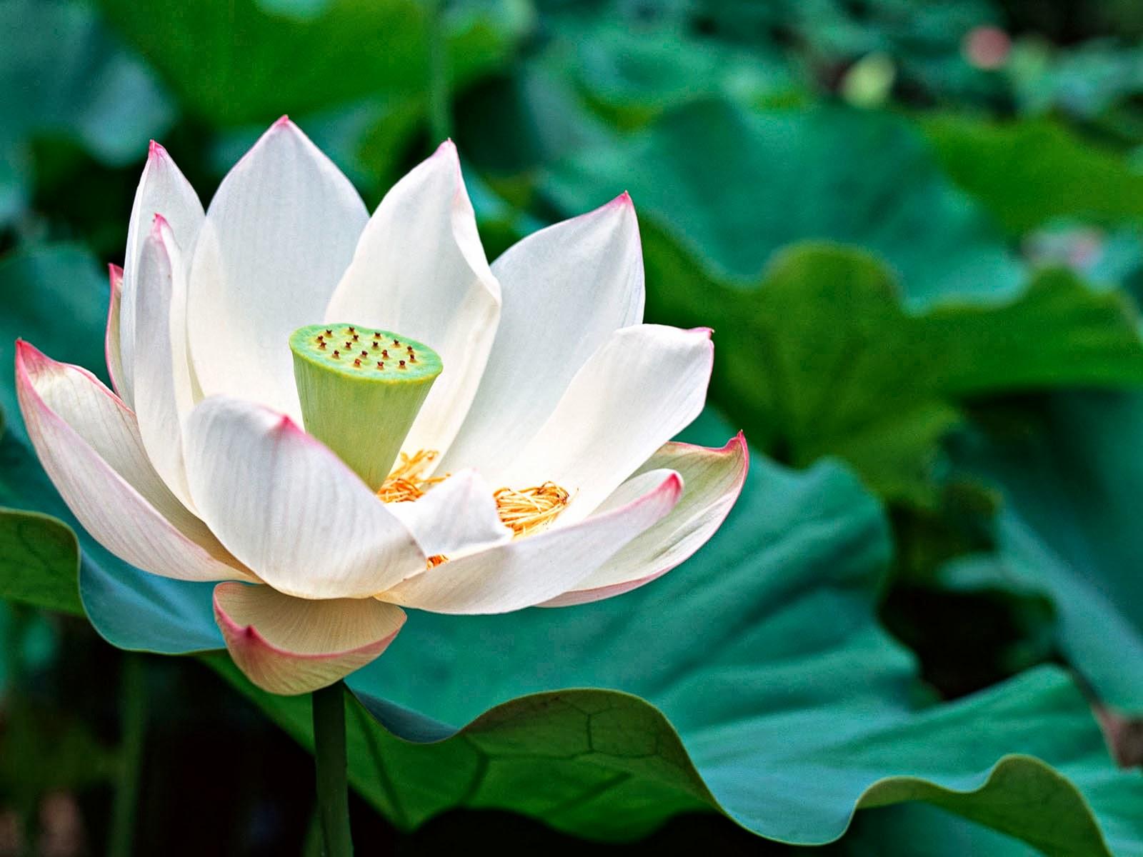 Fondo De Pantalla Flores Blancas En Fondo Rosa: Descarga Fondo De Pantalla Gratis: Fondo De Pantalla