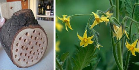 Κάντε Μερικές Τρύπες Σε Ένα Κομμάτι Ξύλου & Κρεμάστε Το Στον Κήπο Σας Για Να Αυξήσετε Την Παραγωγή Των Καλλιεργειών Σας – Μάθετε Γιατί!