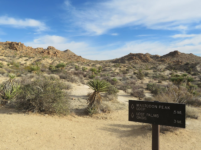 Trail sign to Lost Palms Oasis