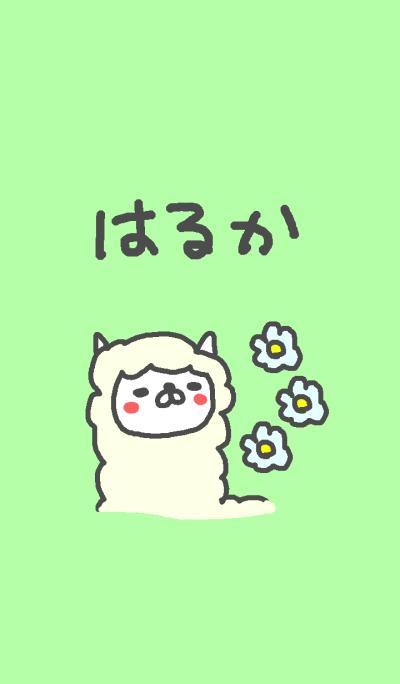 Haruka cute alpaca theme!