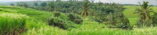 Rizieres-Ricefields-Jatiluwih-Bali