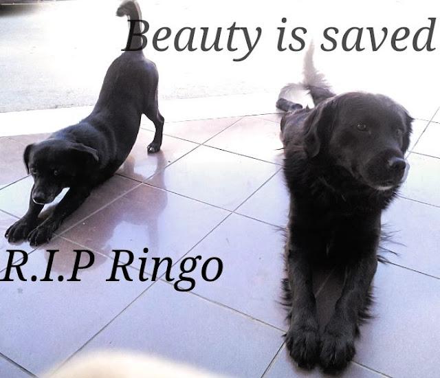 Δίνεται αμοιβή για να βρεθεί ο δράστης που δηλητηρίασε τα σκυλάκια στο Άργος
