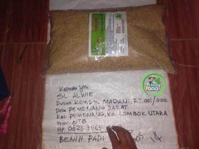 Benih Padi TRISAKTI Pesanan SL ALWIE Lombok Utara, NTB (Sebelum di Packing)