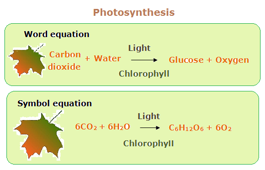 Equation of photosythesis