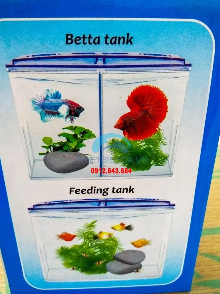Image Siamese Fighting Fish Food - Tank Betta