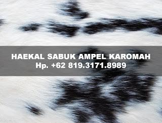 sabuk-ampel-karomah