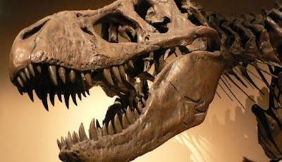 Tyrannosaurus Berburu Mangsa dengan Indera Keenam