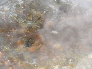 Зимний грибной суп. Городской суп из сушеных грибов