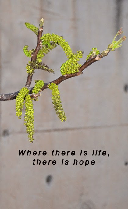 Where there is life there is hope - quote - Photo by shewandersshefinds.com