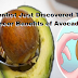 Scientist Just Discovered The Anti-Cancer Benefits of Avocado Seeds - MUST READ!
