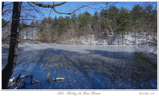 Fells: Making the Pond Blossom