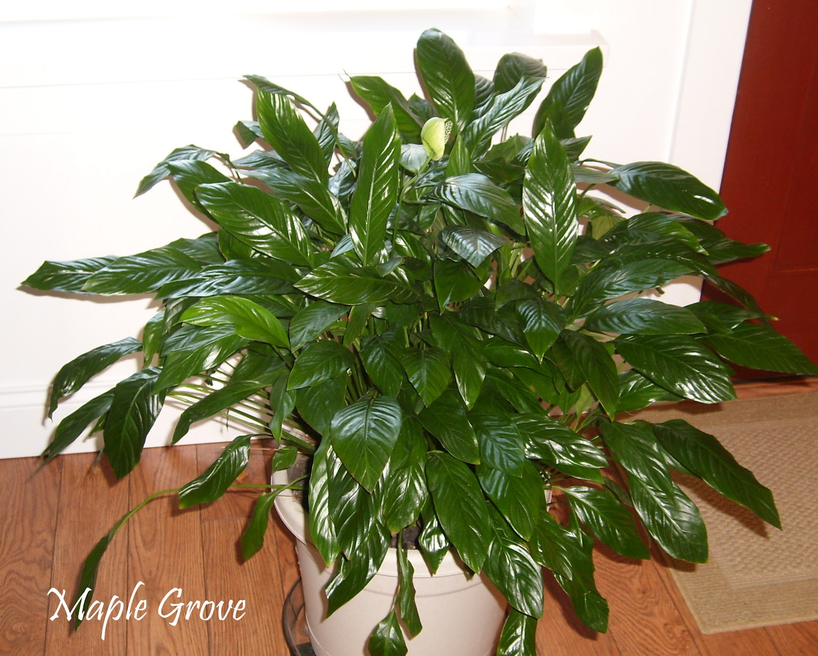 Plant In House Maple Grove Houseplant Makeover
