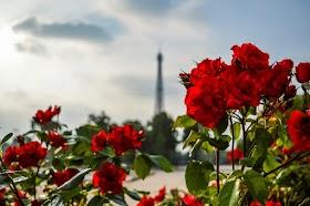 Gambar Taman Bunga Mawar Merah