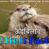 शैतानियों के बादशाह, ऊदबिलाव से जुड़े 20 रोचक तथ्य और जानकारी  20 Otters Facts हिंदी Udbilao