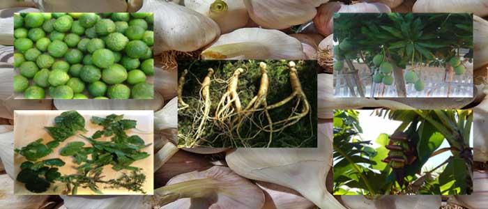 Atasi Lemah Dengan Obat Alami Tradisional