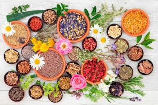 Las mejores plantas medicinales para tu organismo