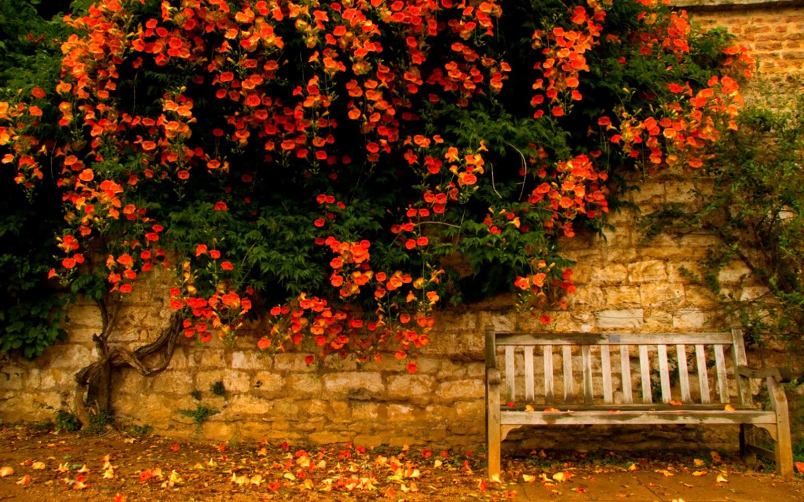 Fall Leaves Hd Wallpapers 1080p Das Leben Ist Bunt Der Herbst Ist Da