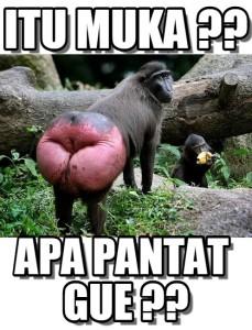 meme dewasa monyet
