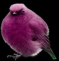 pássaro png