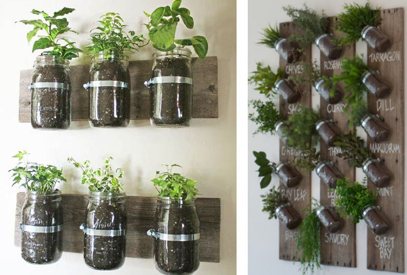 Growing Herbs in See-Through Containers