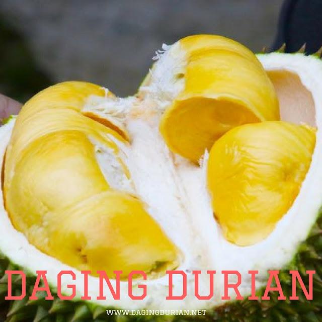gudang-daging-durian-medan-berkualitas-di-balangan
