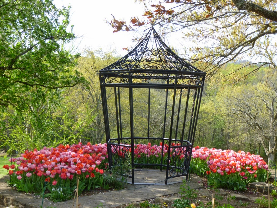 Pink and lavender tulips surround a gazebo